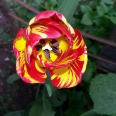 Welch wunderbare Farbenkombiationen die Natur hervorbringt!