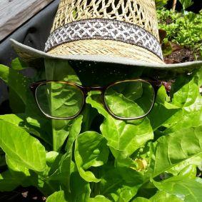 Foto Eva Wolfgruber Fröhwein: Auch dem Salat ist heiß :)