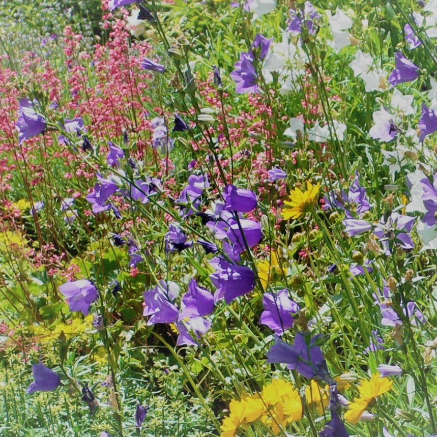 Foto: Dieter Paul: Prächtige Blumenwiese